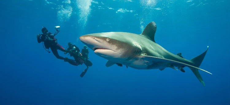 Diving with sharks at The Dubai Mall - Adventure sports in Dubai, UAE